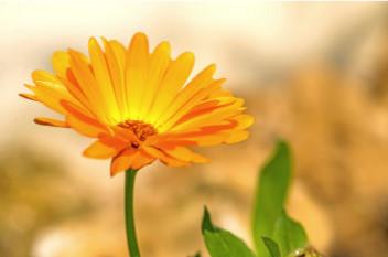 Flor naranja en un fondo difuminado, para el relax